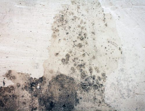 Mold Illnesses- What to Do!