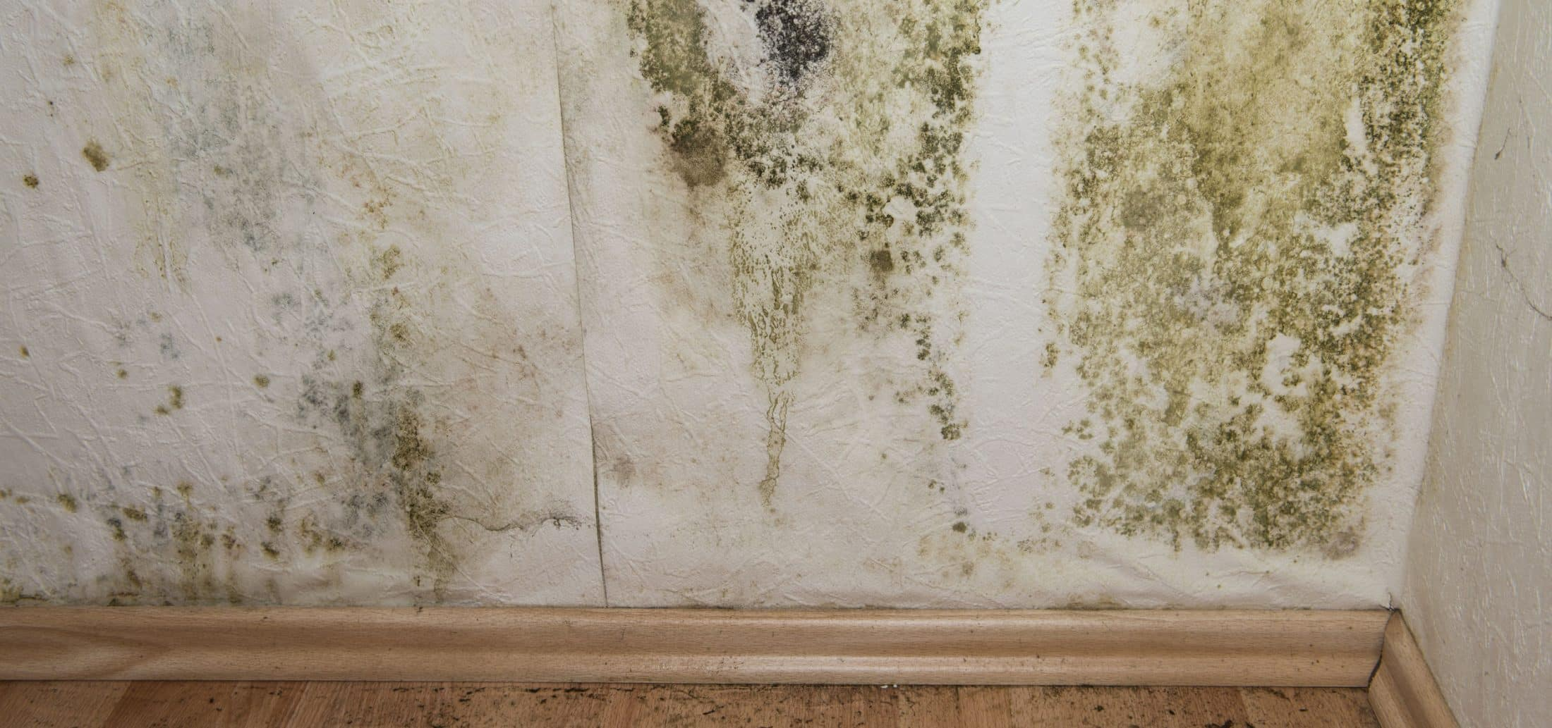 Mold growing on drywall