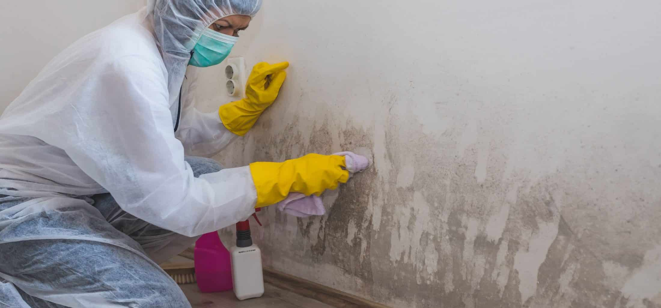 Worker removing mold from a wall