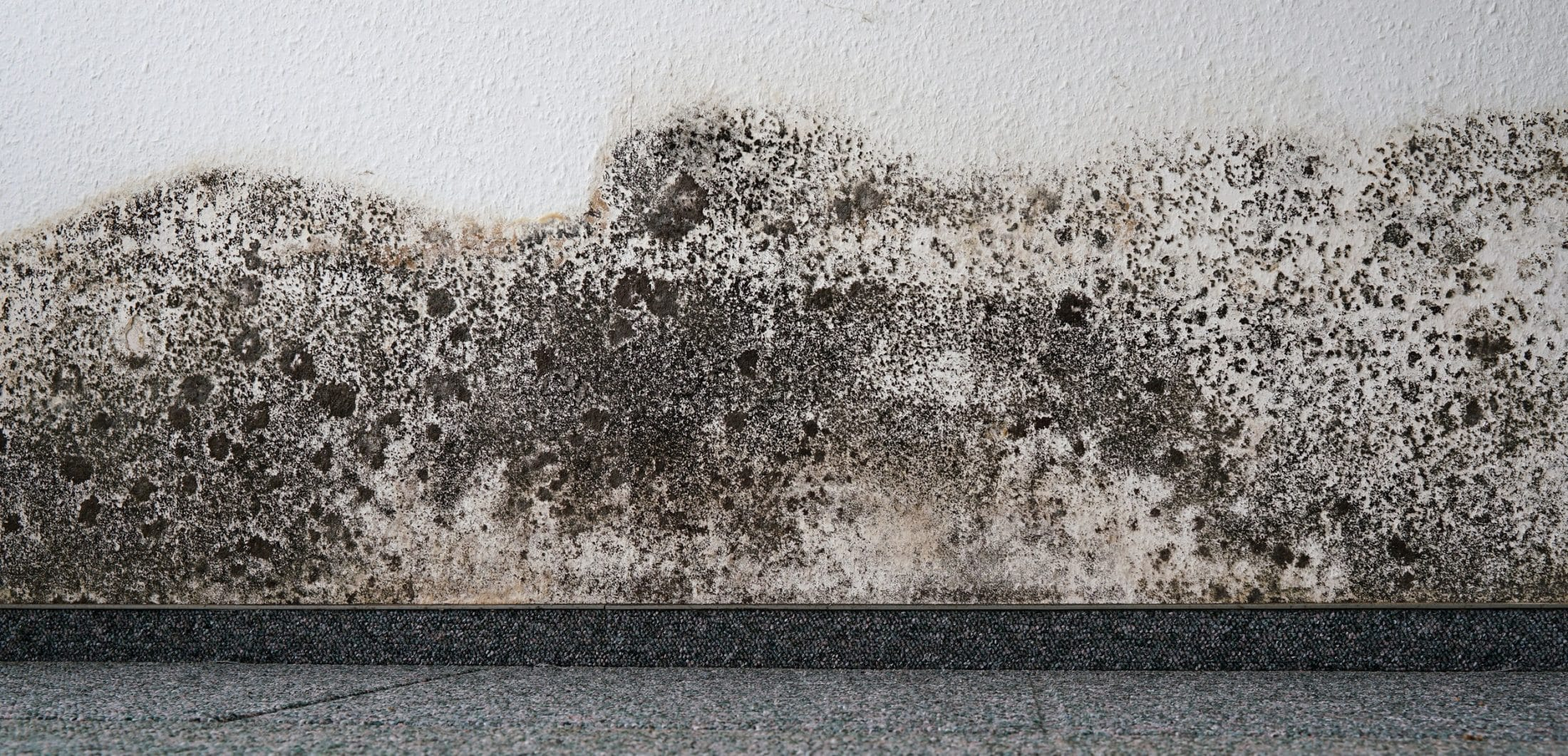 Mold on the wall of an apartment